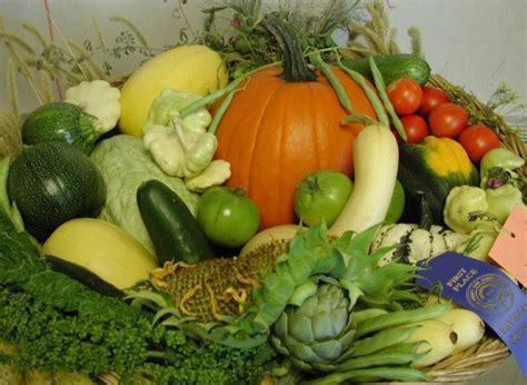 vegetable gardening in arizona best 25 arizona gardening ideas on desert