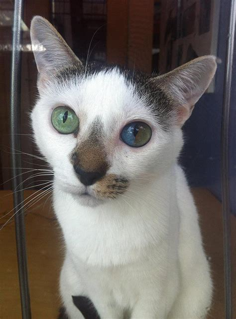 cats color vision this cat s a whole universe inside bored panda