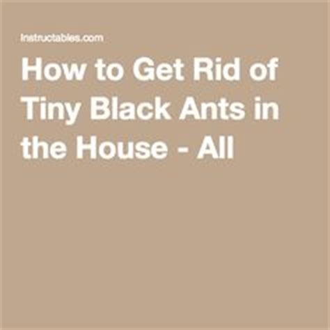 Get Rid Of Ants In Room by Black Ants How To Get And Black On