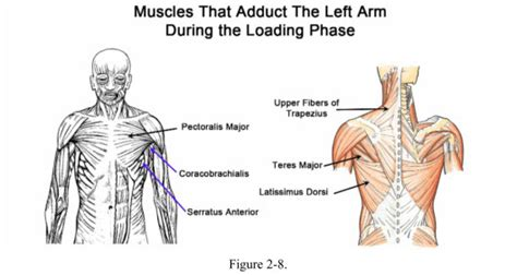 what muscles do you use to swing a bat how to swing a baseball bat backward rotation of spine