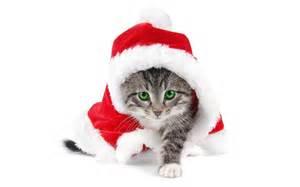 Jong katje met groene ogen in kerst sfeer
