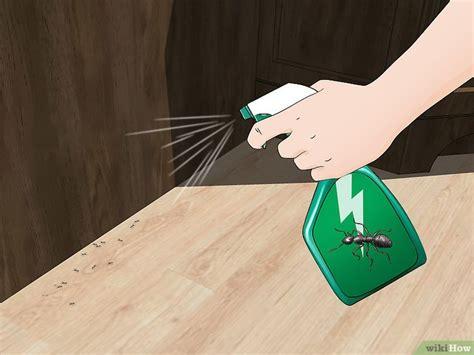come eliminare le formiche volanti come eliminare le formiche 10 passaggi illustrato