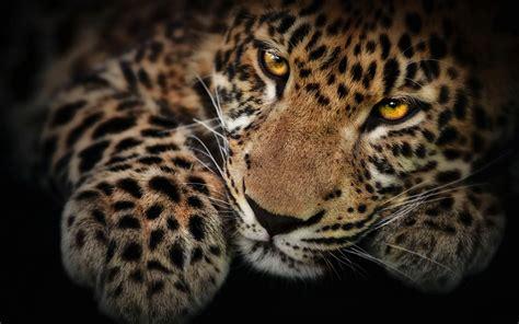 imagenes de jaguar blanco brown horse pictures wallpaper 1920x1080 74537