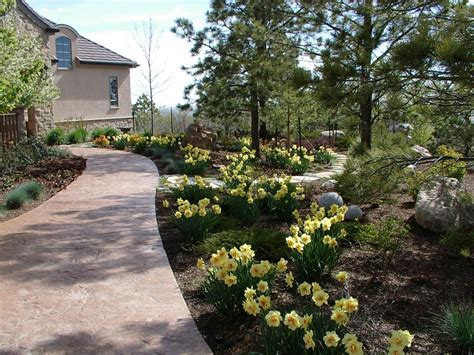 landscaping landscaping ideas colorado springs