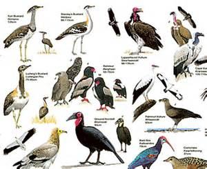 endangered birds list endangered bird species