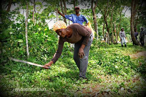 imagenes de mujeres cortando hierba hasta los chinos que todo lo viven acechando est 225 n
