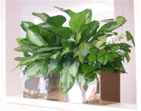 good office plants how to choose a good office plant interior office plants