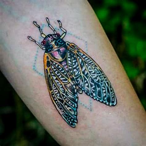 cicada tattoo cicada www imgkid the image kid has it