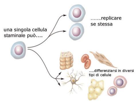 cellule staminali staminali e terapia genica andreacollo