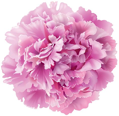 peony clipart peony transparent png clip image gallery