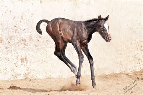 bilder lebensfreude lebensfreude foto bild tiere tierkinder pferde
