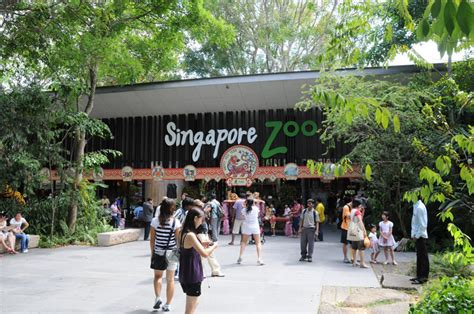 singapore zoo new year 2015 weekend list magazine
