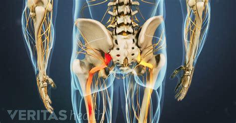 sciatic nerve anatomy video