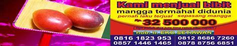 Jual Bibit Anggrek Kultur Jaringan kultur jaringan mangga mahachanok buah mangga