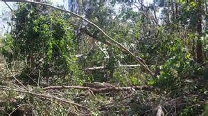 bush resort flattened by tropical cyclone marcia abc