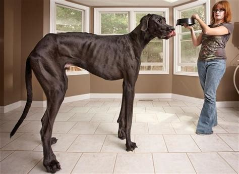 World Bench Press Records Worlds Biggest Dogs Images Wallpapers Pictures Fashion