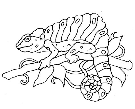 free zoo animal coloring pages free animals coloring pages zoo to