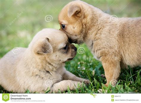 two puppies two puppies stock image image 5004711