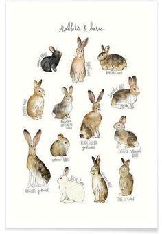 tattoo prices hamilton nz watercolor rabbit rabbit print bunny print animal print