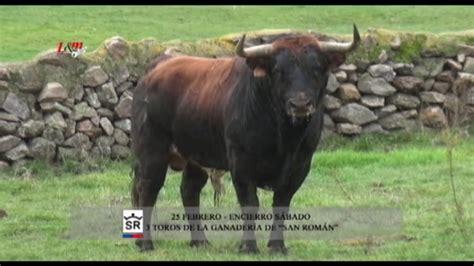 imagenes perronas de toros toros del carnaval del toro de ciudad rodrigo 2017 youtube