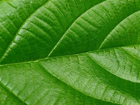 wallpaper alam semula jadi wallpapers green leaf wallpapers