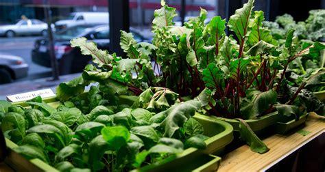 Indoor Winter Vegetable Garden 8 Veggies To Grow Indoors This Winter Food Magazine