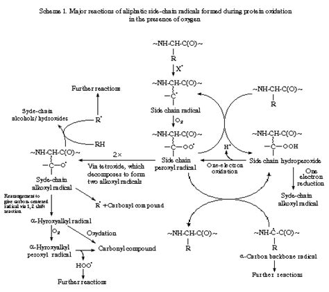 protein oxidation free radical damages in proteins