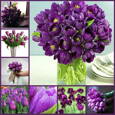 types of purple lovely flowers types