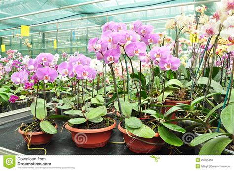 growing orchids successful gardening indoors and out an illustrated encyclopedia and practical gardening guide books growing orchids in greenhouse stock photo image 23905360
