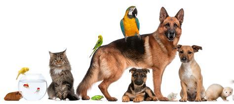 about pet pet biography standard package pet biographies