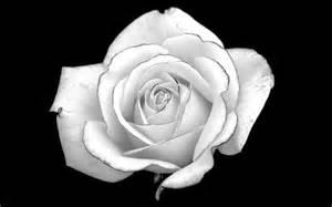 Dozen Red Roses Black And White Rose Desktop Background Hd 2560x1363 Deskbg Com