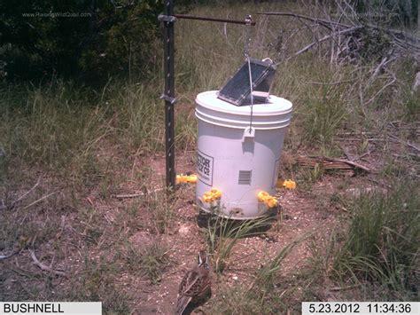 quail feeder update success and failure gentleman farmer
