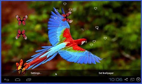 download birds live wallpaper gallery