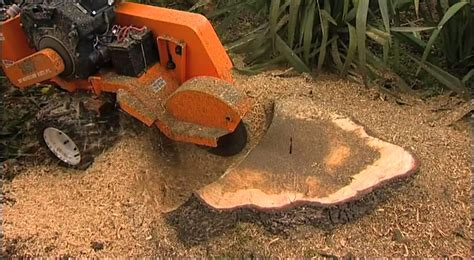 stump removal redcliffe qld tree loppers