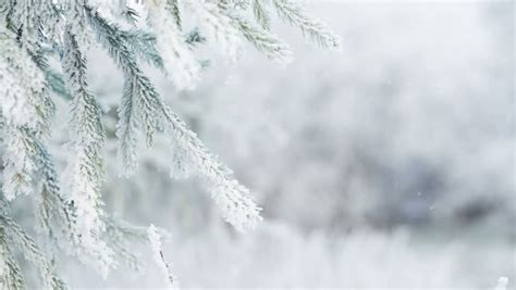 explaining frost patterns contamination speed of hoarfrost stock footage video shutterstock