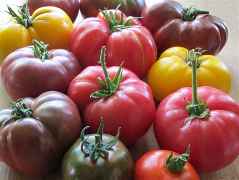 heirloom tomatoes the chefs garden epicurean
