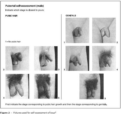 womens pubic hair development etapas de tanner informaci 243 n pinterest nude