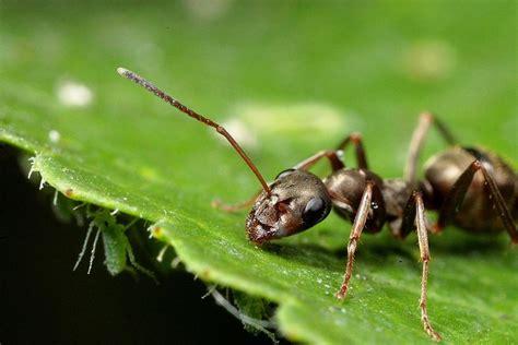 Ways Deal With Ants In Your Vegetable Garden Ant In Vegetable Garden
