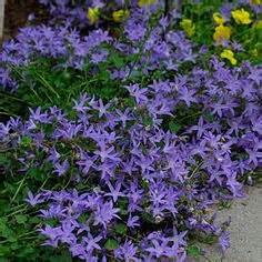 1000 images about perennial zone 9 on pinterest