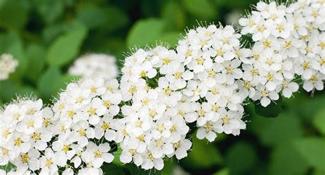 plant some easy care shrubs to brighten your garden this