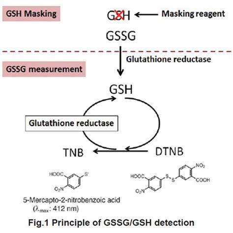quantification kit  oxidized  reduced glutathione