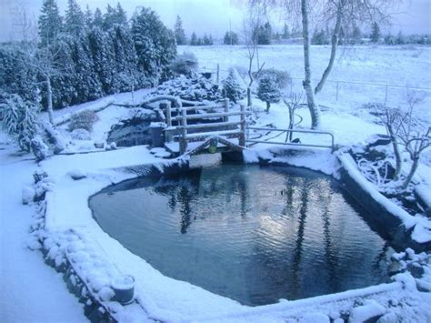 trout pond in winter small garden ponds pond ponds