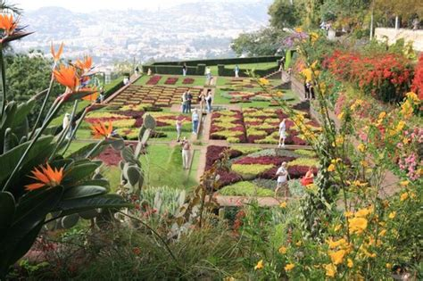 Madeira Botanical Gardens Jardim Botanico Picture Of Madeira Botanical Garden Funchal Tripadvisor