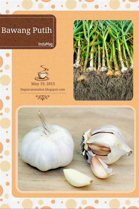 dapur ummahat mengenal bumbu dapur bawang putih