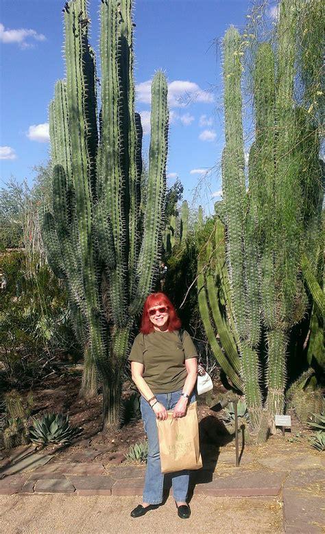 botanical garden scottsdale desert botanical gardens scottsdale az never say die