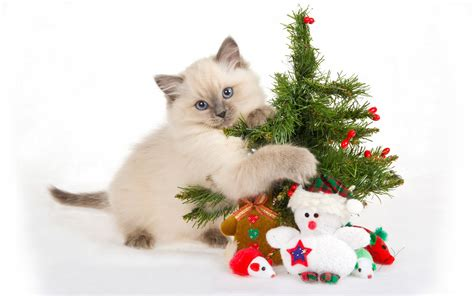 cat christmas gift wallpapers beautiful desktop