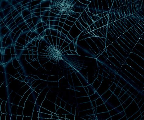 spider web pattern photoshop spider web brush ps download free vector 3d model icon