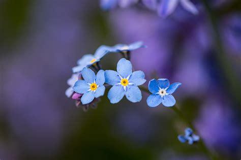 imagenes minimalistas de flores flores celestes peque 241 as hd 2048x1365 imagenes