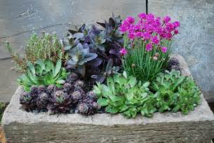 succulents container gardens four season succulent garden up anthr 212 pek