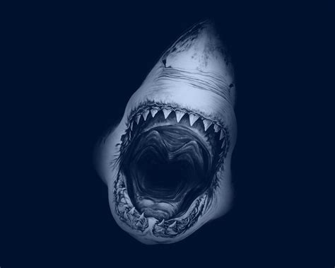 great wallpaper for mac 1280x1024 great white shark desktop pc and mac wallpaper